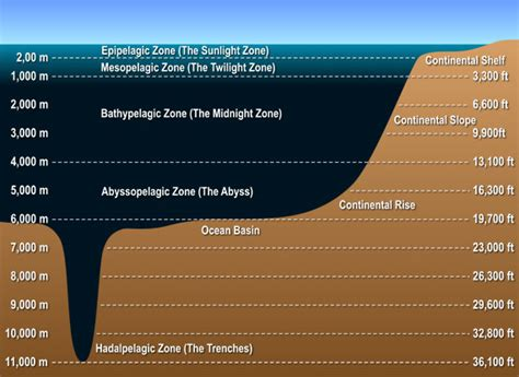 Plants That Do Not Need Much Sunlight by Mthsecology The Abyssal Zone