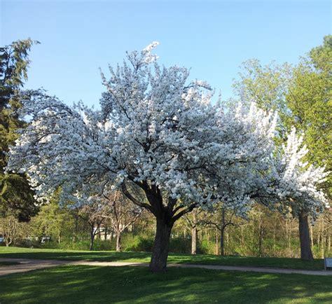 Baum F R Garten 3270 by Garten Hinrei 223 End B 228 Ume F 252 R Den Garten Ideen