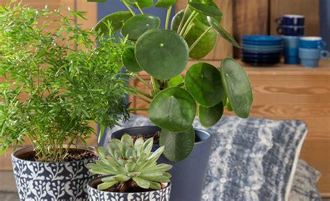 wohnung pflanzen warum zimmerpflanzen in jeder wohnung immer sinnvoll sind