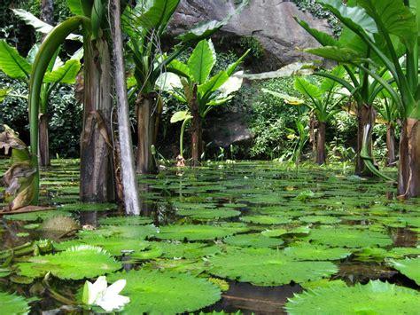 Seychelles Botanical Garden Panoramio Photo Of Seychelles Botanical Garden