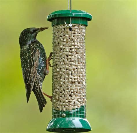the best homemade bird food recipes