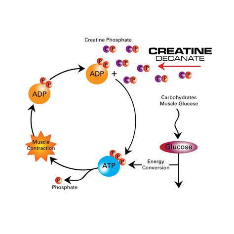 creatine carnage creatine and its use as a pre workout supplement best
