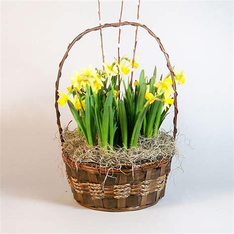 daffodil plant morning flower shop