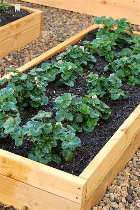 strawberry garden beds oh now i really want to convert my small backyard into