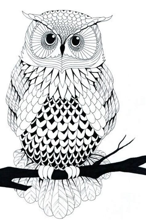 Owl Line Art Very Cool Drawing Inspiration Pinterest Really Owl Drawings With Color