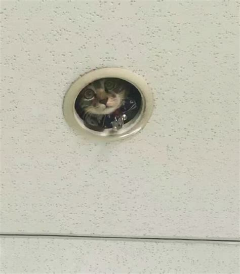 Ceiling Cat Cutout by Spying Ceiling Cat Photoshop Battle Bored Panda