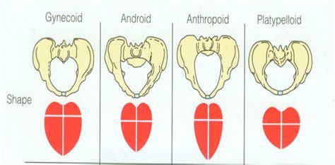 android pelvis nursing 323 gt dunnington gt flashcards gt intrapartum nursing care studyblue
