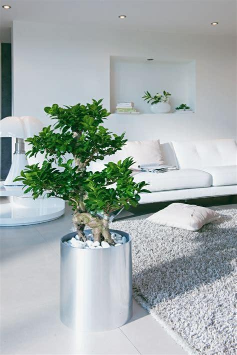 Ficus Im Schlafzimmer by Feng Shui Pflanzen F 252 R Harmonie Und Positive Energie Im