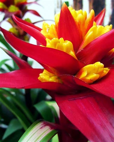 bright hawaiian bromeliads flowers god s beautiful creation for