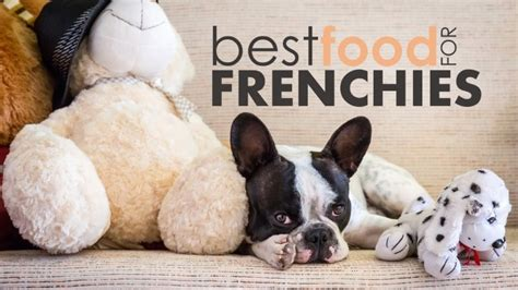 best food for bulldogs best food for bulldogs help your frenchie reach his puppy potential herepup