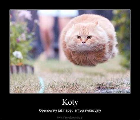 Sorry Po Meme - koty demotywatory pl