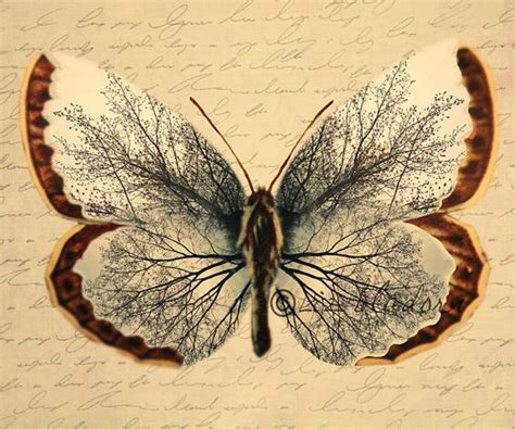 tattoo butterfly vintage vintage butterfly unique image of tree in the wings by