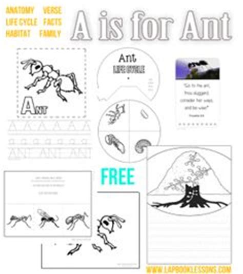 Animal Learn To Write Wipe Clean Activity Book 1000 images about abc learning on chicka