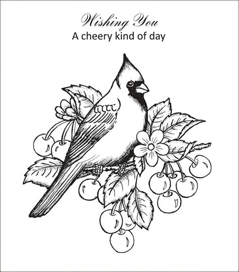 winter cardinal coloring page christmas cardinal coloring page www imgkid com the
