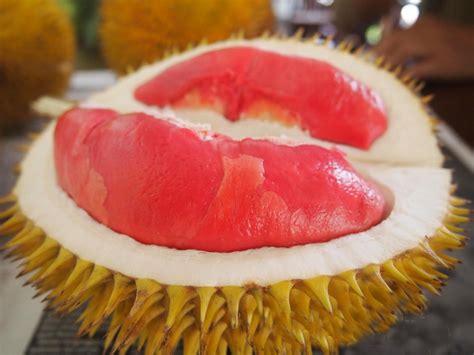Bibit Buah Duren 15 manfaat dan khasiat durian merah untuk kesehatan khasiat