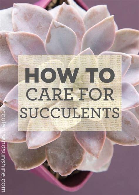 111 best images about garden sedum succulants on pinterest gardens propagating succulents