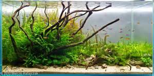 2012 aga aquascaping contest 122