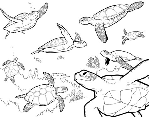 Sea Colouring Book sea turtle coloring pages bestofcoloring