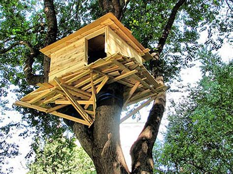Childrens Treehouses Tree House From The Childrens Fargo Renting Out Tree House Fm Observer Fargo