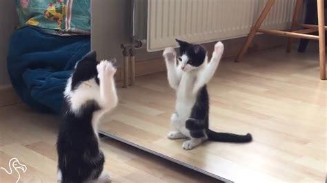 Cat Mirror cat looking in mirror sees kitten sees himself in