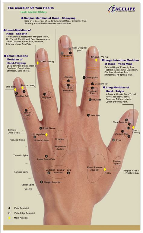 acupressure diagram of pressure points uncategorized 171 aculife book