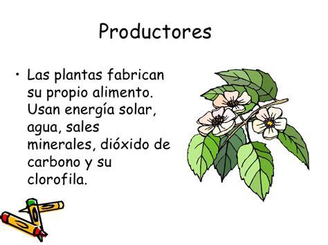 cadenas troficas productores cadenas alimentarias