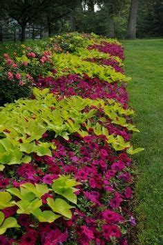 Gardenia Annual Or Perennial 17 Best Ideas About Annual Flowers On Flowers