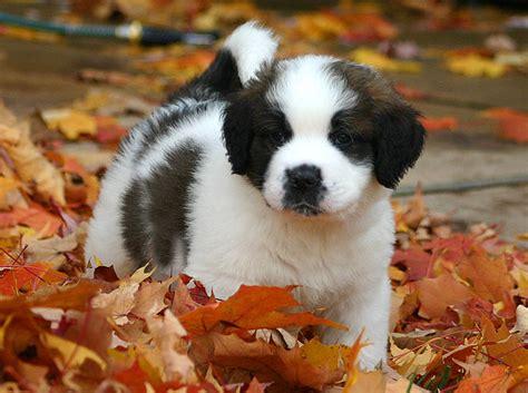 choosing a puppy choosing a puppy tips for choosing your best friend
