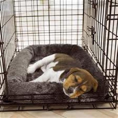 puppy screaming in crate got a crate squawker thedogtrainingsecret