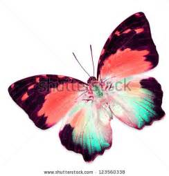 colorful butterfly logo butterfly stock images royalty free images vectors