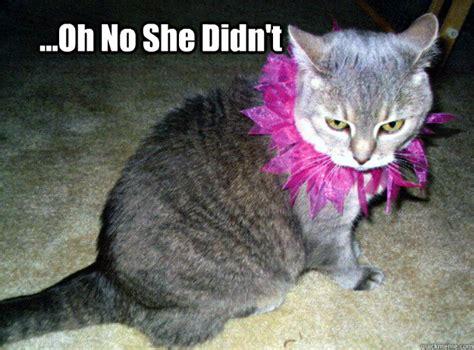 Happy Kitten Meme - told dog to chase mailman he got taken to the pound