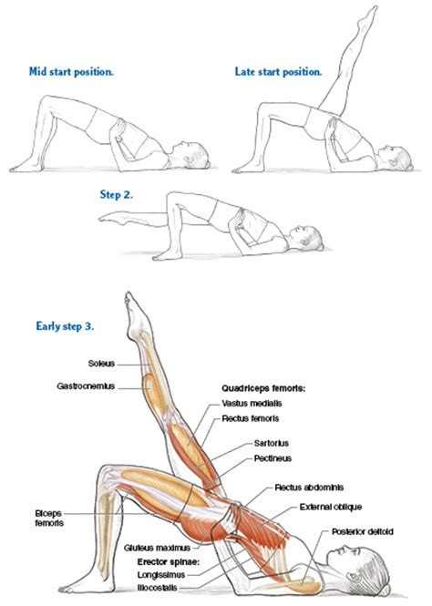 pilates anatomy bridging for a functional spine pilates anatomy