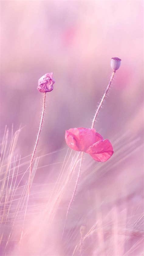 pink purple flower fields iphone     iphone