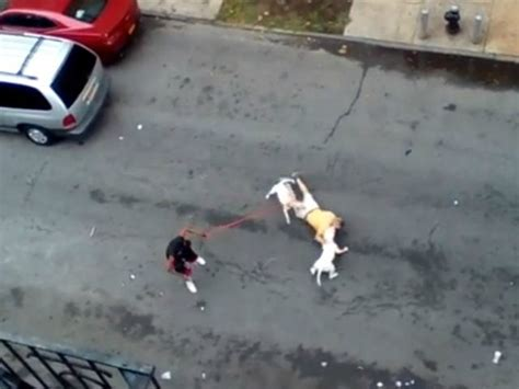 New York Woman Arrested for Ordering Two Pit Bulls to ... Huge Pitbull Attack