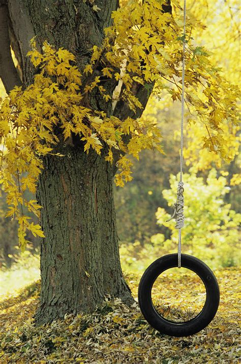 tree with tire swing tree with tire swing quebec city photograph by ron watts