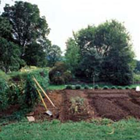 8 steps for better garden soil organic gardening
