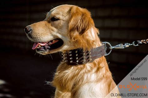 golden retriever collars royal spiked leather collar gladiator style mill store