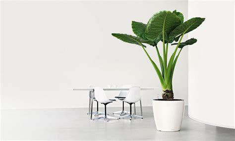 White Modern Planters by Large White Plastic Modern Office Or Patio Planter By Lechuza