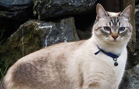 una noche un gato 191 por qu 233 no es una buena idea poner un cascabel a un gato