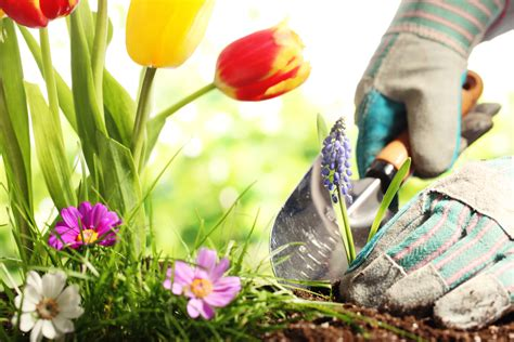 why you should start gardening this