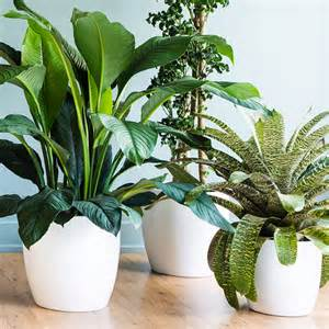 House Plat Indoor Plants Sunset