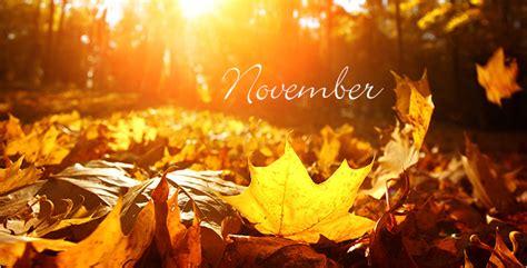 garten im november aldi s 220 d gartenkalender november
