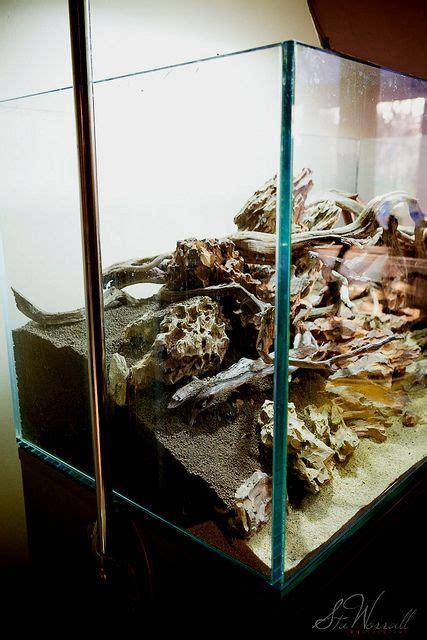 setup aquascape setup of my new aquascape made from 30kg of dragon stone