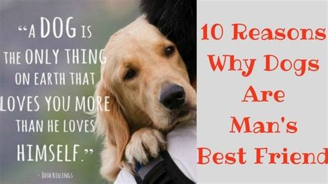 why are dogs s best friend 10 reasons why dogs are s best friend do a look