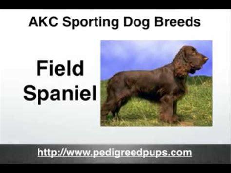 sporting breeds dogs breeds more than 300 breeds funnydog tv