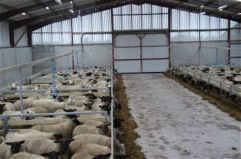 Sheep Sheds Ireland by Agricultural Animal Handling Systems Northern Ireland
