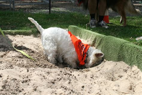 how to dig a pit in your backyard how to dig a pit in your backyard 28 images how to dig