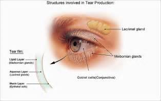 i think my is blind in one eye facts about the cornea and corneal disease national eye