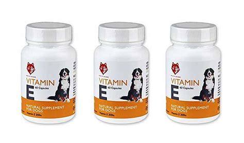 vitamin e for dogs how to your everything you need about dogs and puppies