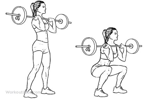 Bench Press Row Front Barbell Squat Illustrated Exercise Guide Workoutlabs